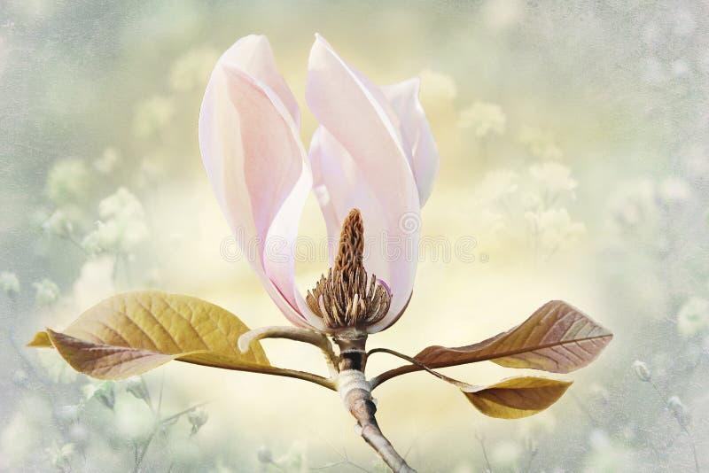 flor rosa clara de la magnolia, diseño de tarjeta con el tex de la flor fotografía de archivo