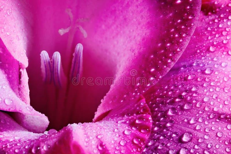 Flor rosada fotografía de archivo