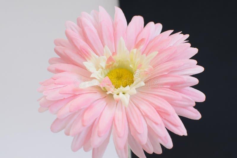 Flor rosada foto de archivo libre de regalías