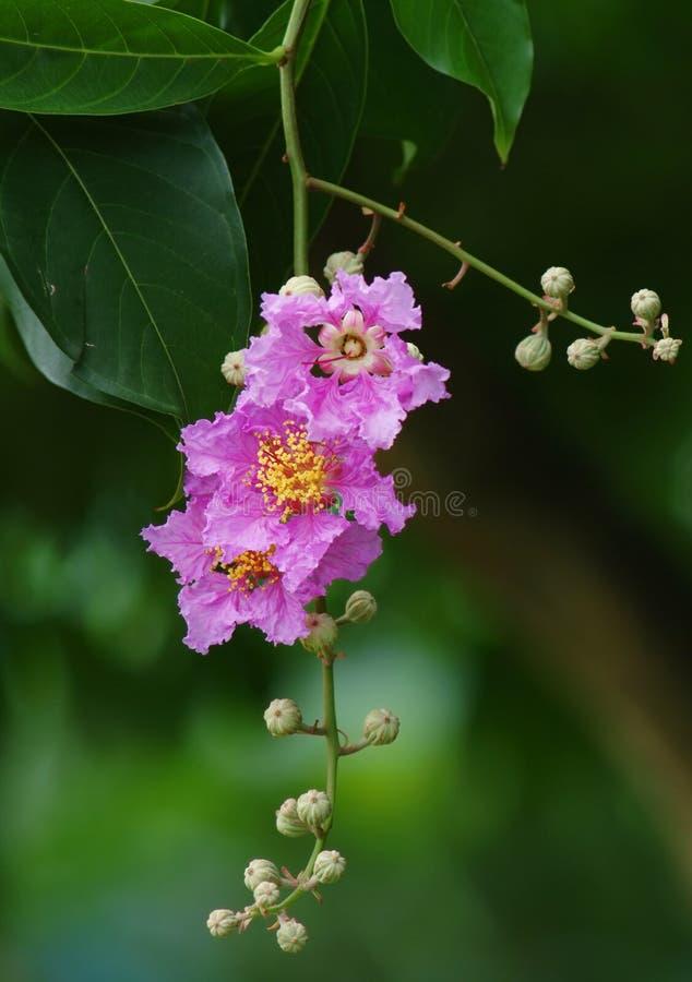 Download Flor rosada foto de archivo. Imagen de ambiente, outdoor - 7276480