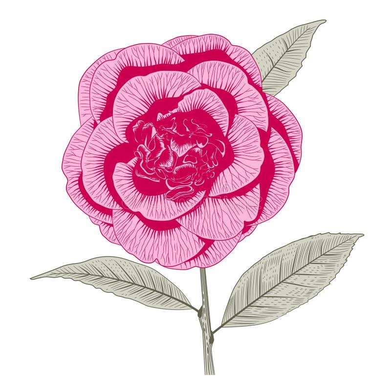 Flor rosada brillante de la forma de la peonía de la camelia libre illustration