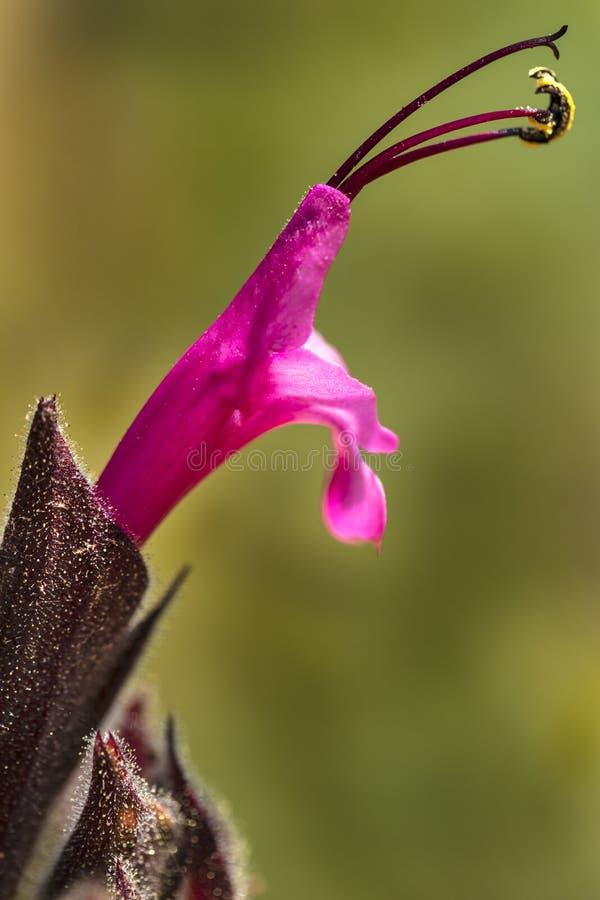 Flor rosada brillante del cactus fotos de archivo
