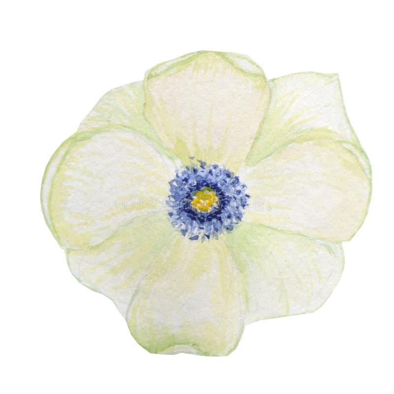 Flor rosada brillante hermosa de la acuarela Aislado en el fondo blanco fotos de archivo