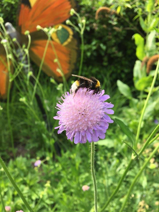 Flor rosada con el abejorro foto de archivo libre de regalías