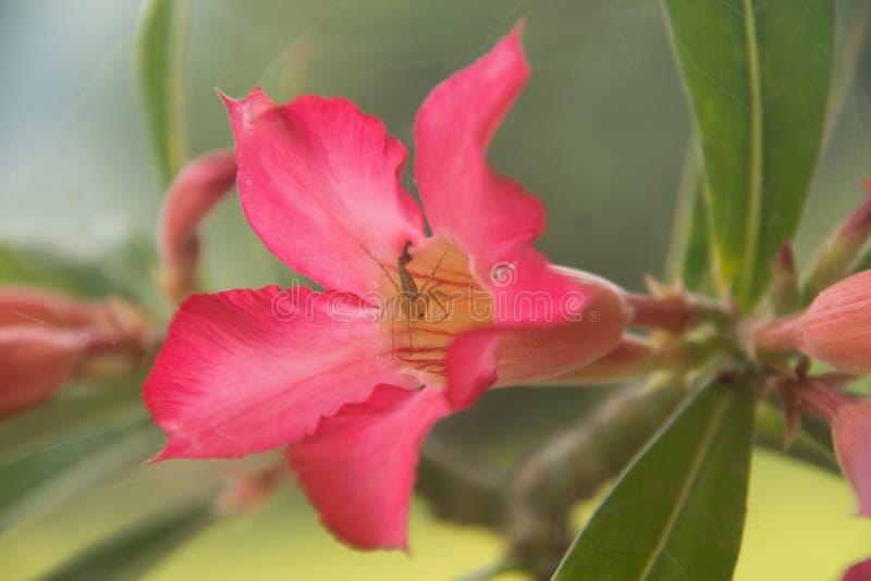 Flor rosada con el critter en centro fotos de archivo libres de regalías