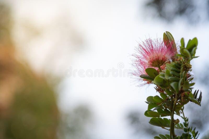 Flor rosada con la borde-luz imagen de archivo libre de regalías