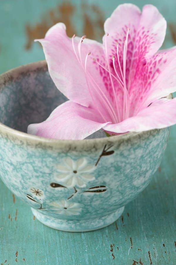 Flor rosada de la azalea fotos de archivo