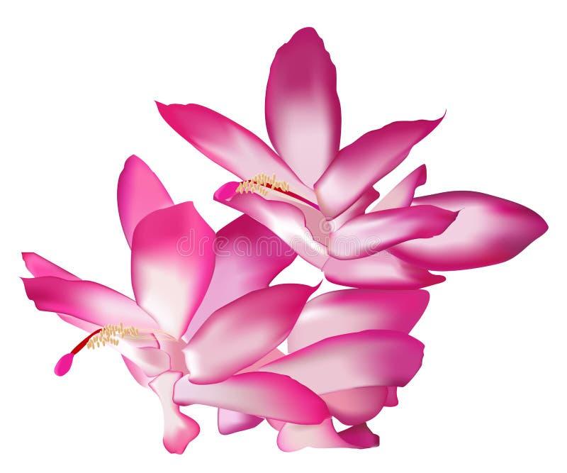 Flor rosada de la magnolia stock de ilustración