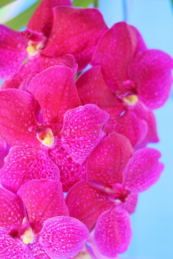Flor rosada de la orquídea en la naturaleza imágenes de archivo libres de regalías