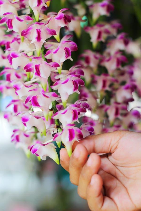 Flor rosada de la orquídea en la naturaleza imagen de archivo