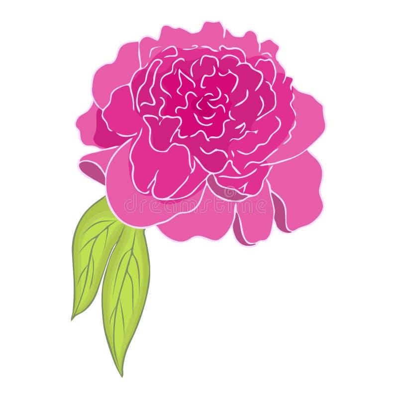 Flor rosada del peony bosquejo coloreado de la peonía Ejemplo gráfico de la peonía aislado en el contexto blanco Mano de la peon? libre illustration