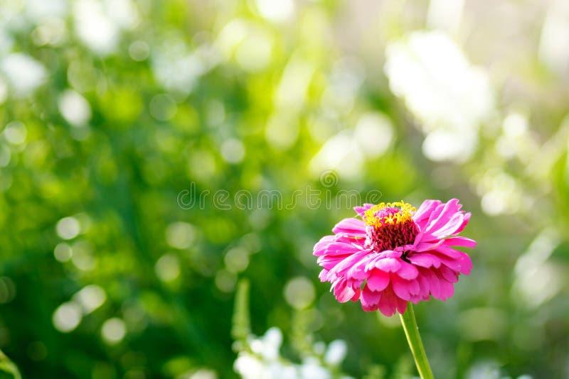 Flor rosada en el jardín imagen de archivo