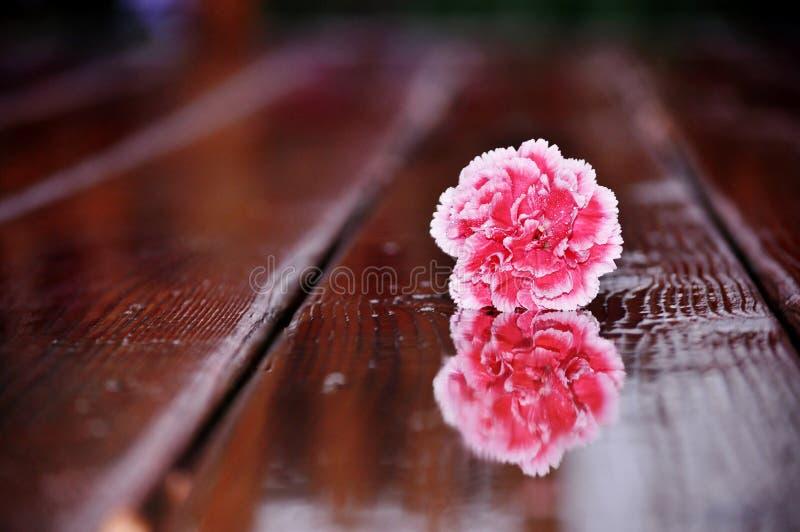 Flor rosada en el piso mojado imagen de archivo libre de regalías