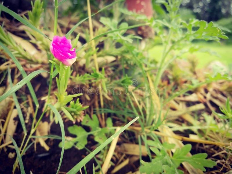 Flor rosada en graas verdes foto de archivo libre de regalías