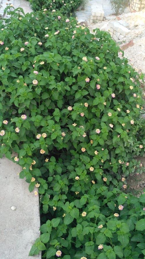 Flor rosada en hierba fotografía de archivo