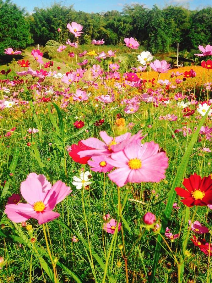 Flor rosada hermosa fotos de archivo