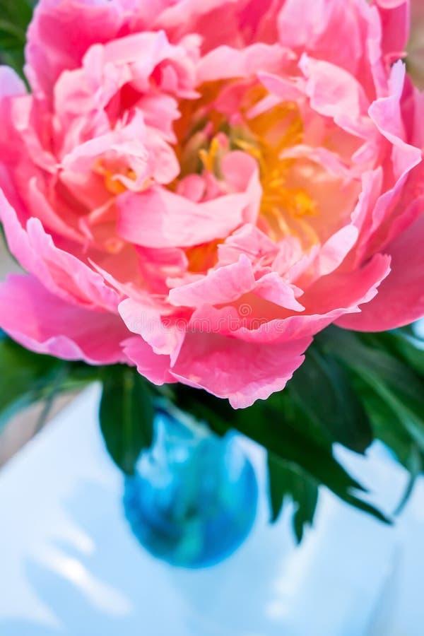 Flor rosada hermosa del peony imágenes de archivo libres de regalías