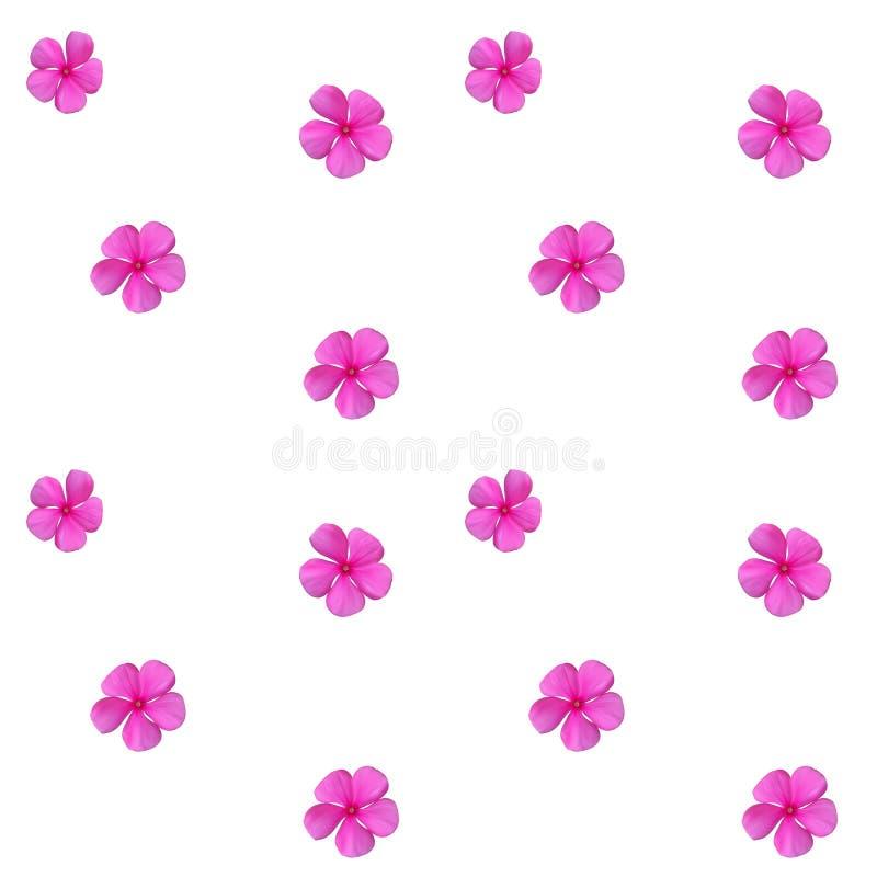 Flor rosada naturalista hermosa colorida Modelo inconsútil V libre illustration
