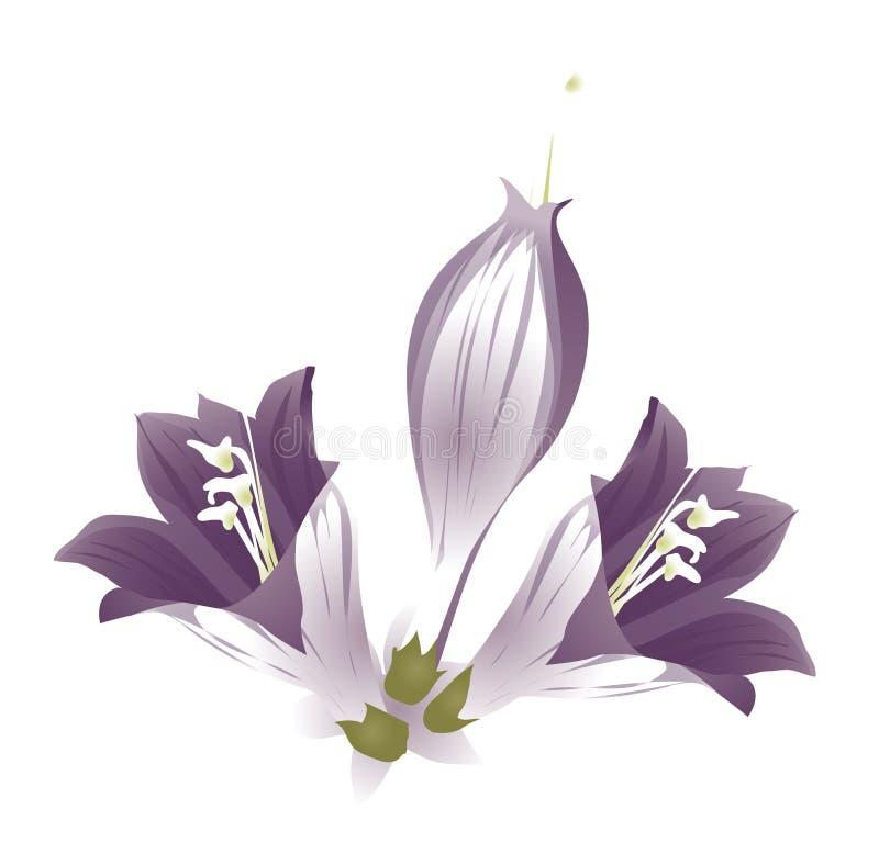 Flor roxa ilustração royalty free