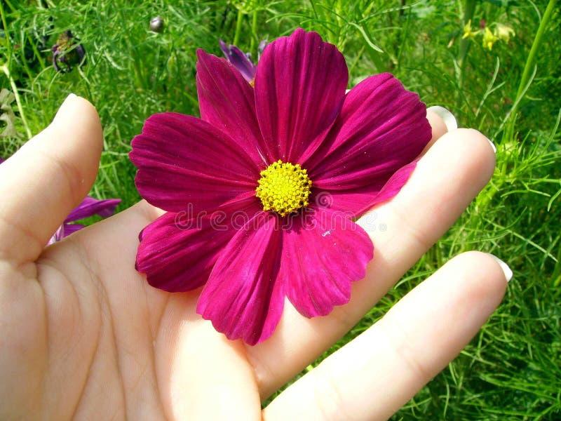 Flor roxa imagem de stock