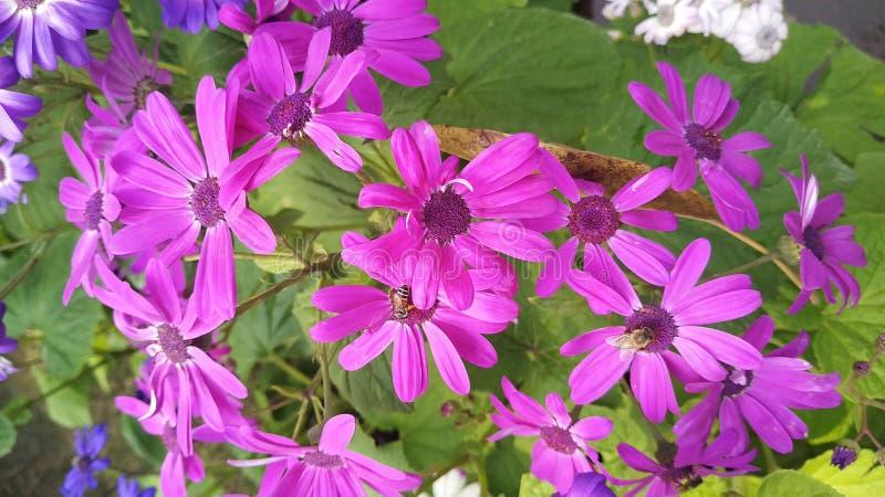 Flor roxa com cheiro bonito fotos de stock royalty free