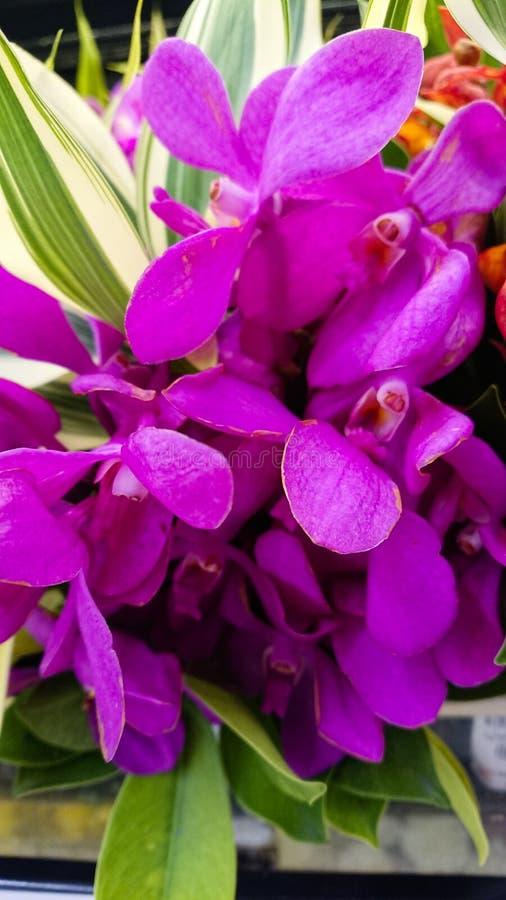 Flor roxa das orquídeas fotos de stock