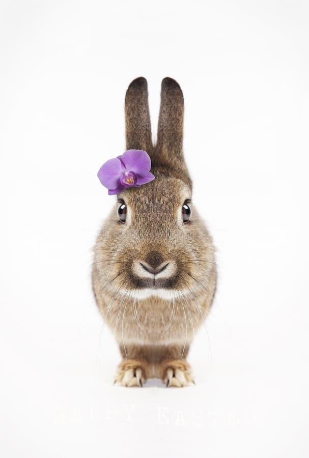 Flor roxa do coelho foto de stock