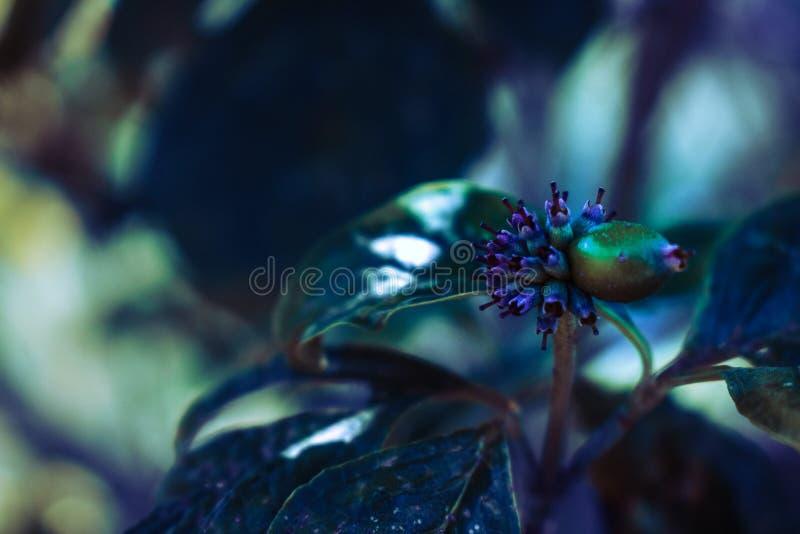 Flor roxa e verde da árvore fotos de stock royalty free