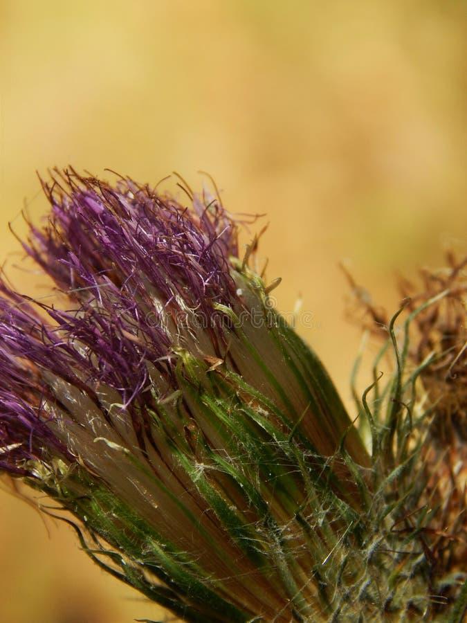 Flor roxa em uma foto clara do macro do fundo fotos de stock