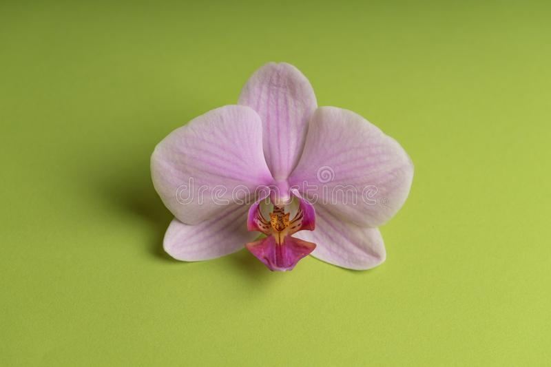 Flor roxa pálida delicada da orquídea em um fundo colorido imagem de stock