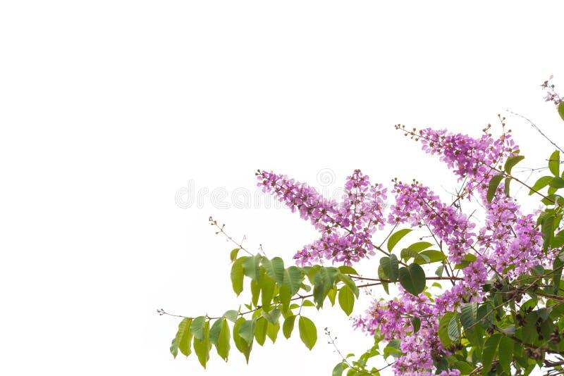 Flor roxa pequena bonita imagem de stock