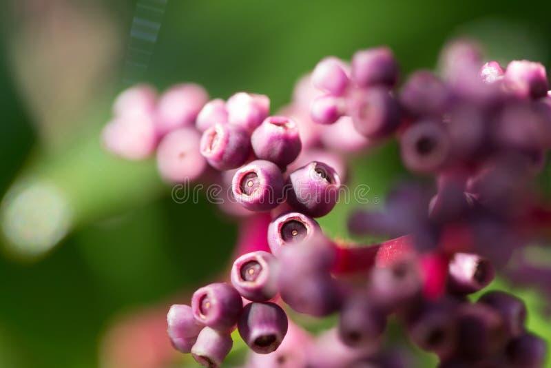 Flor roxa selvagem imagens de stock royalty free