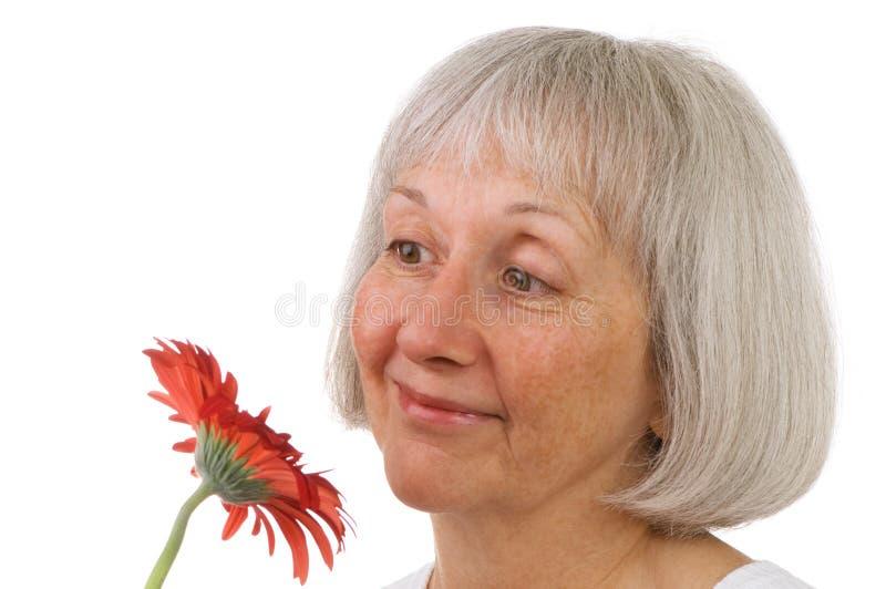 Flor sênior da senhora Apreciação Um Vermelho Margarida fotografia de stock royalty free
