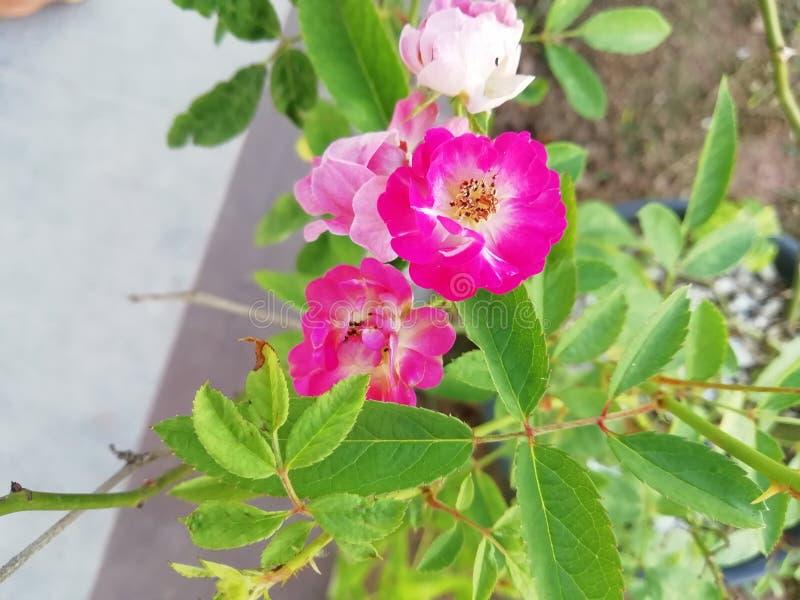 Flor! It& x27; s multicolour! fotografia de stock royalty free