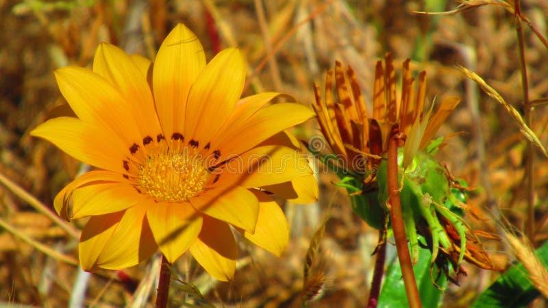 Flor salvaje fotografía de archivo libre de regalías