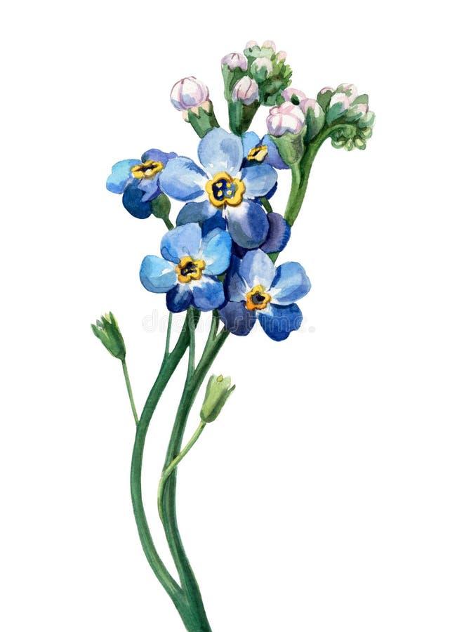 Flor salvaje libre illustration