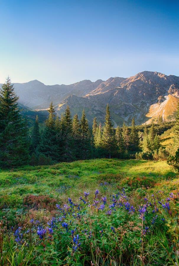Flor salvaje en la montaña verde del bosque, Tatras, Eslovaquia fotos de archivo