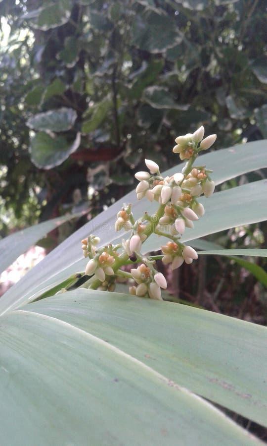 Flor salvaje en Sri Lanka imagenes de archivo