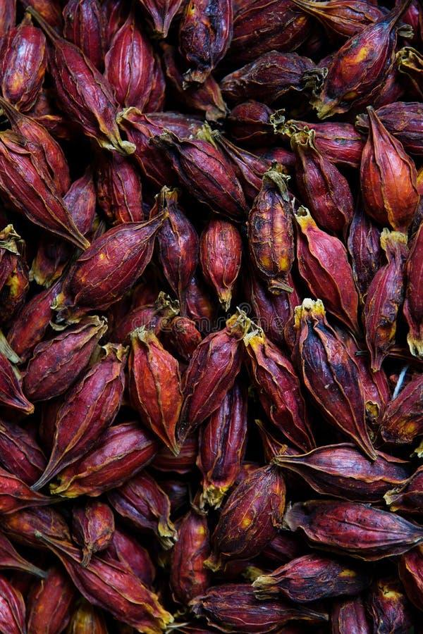 Flor seca do roselle fotos de stock royalty free