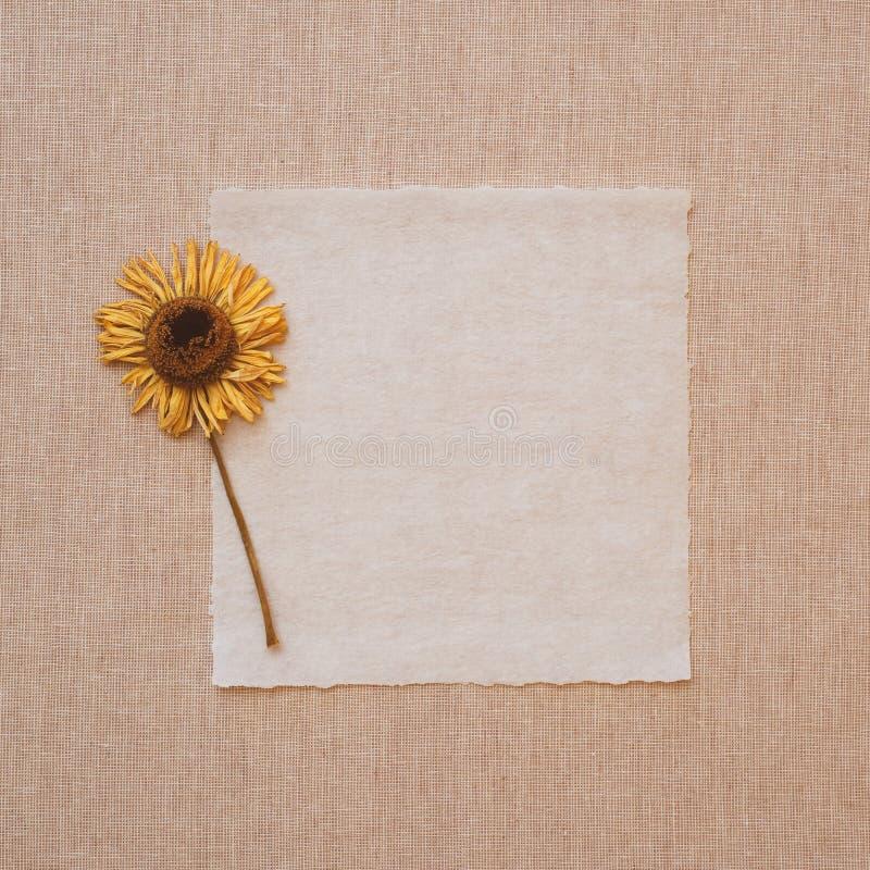 Flor secada amarilla en tarjeta de nota vieja del papel de pergamino en el mantel de lino beige Es en blanco para la copia, el te fotos de archivo