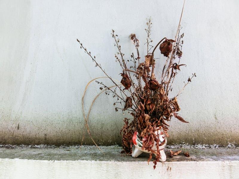 Flor secada com o vaso em Tailândia fotos de stock