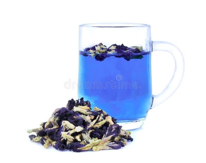 Flor secada da ervilha de borboleta com o chá da ervilha de borboleta isolado fotografia de stock royalty free