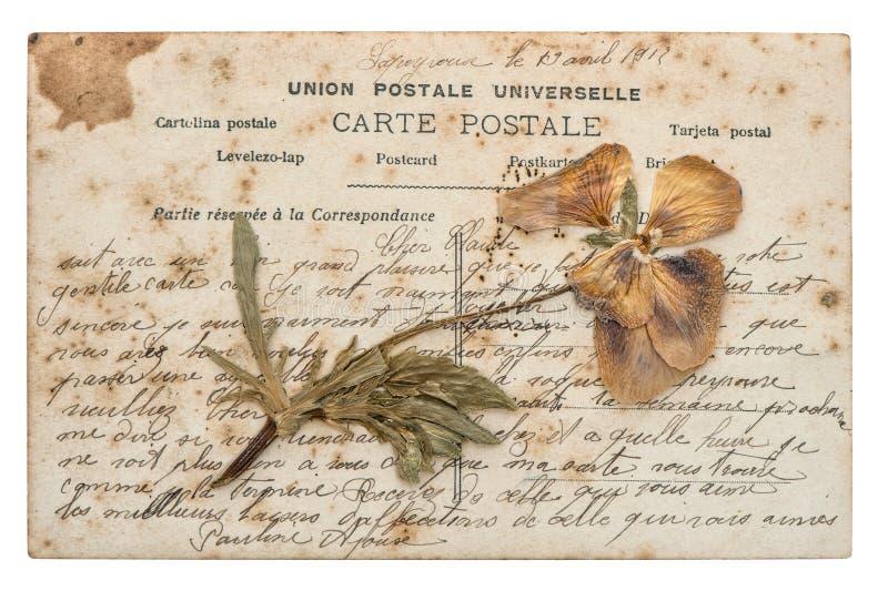 Flor secada del pensamiento y postal vieja en blanco imágenes de archivo libres de regalías