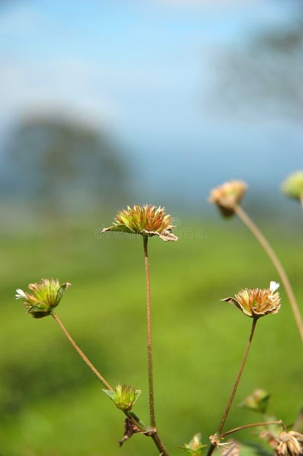 Flor selvagem imagem de stock royalty free