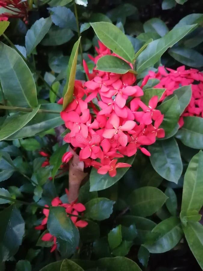 Flor selvagem bonita foto de stock royalty free