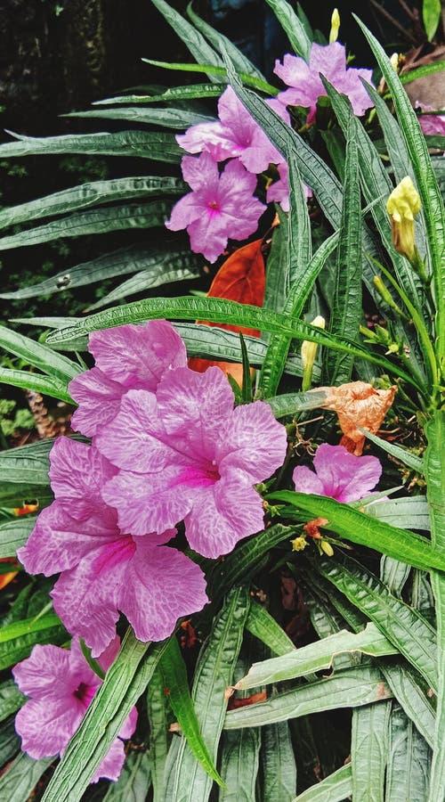 Flor selvagem colorida foto de stock