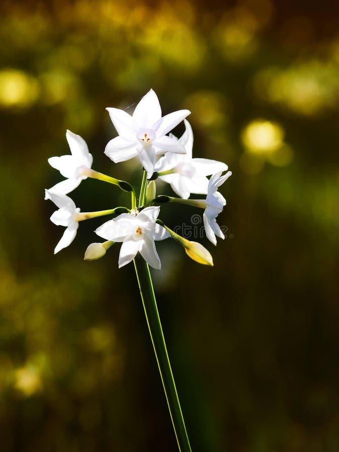 Flor selvagem com as teias de aranha que refletem imagens de stock