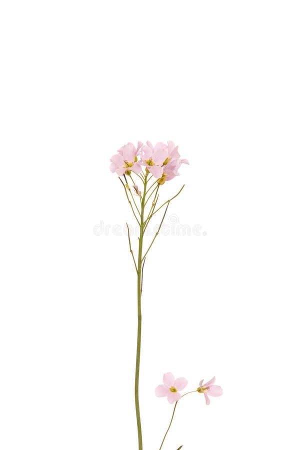 Flor selvagem cor-de-rosa imagem de stock