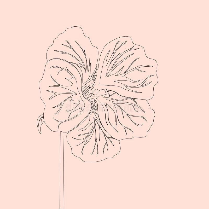 Flor selvagem da chagas A lápis desenho preto isolado no fundo cor-de-rosa macio Vector a ilustração floral ilustração do vetor