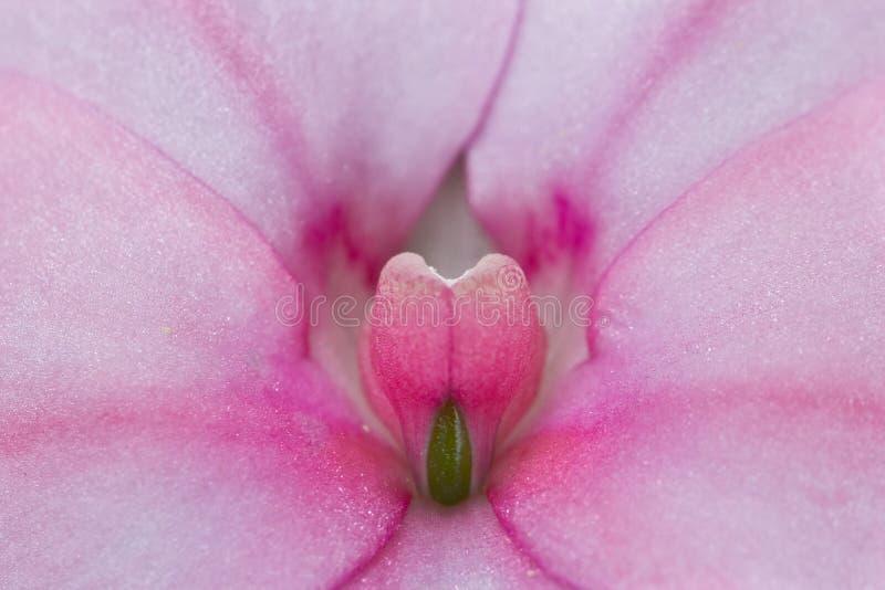 Flor simétrica rosada imagen de archivo